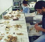 Pesquisadores do IB analisam em laboratório fragmentos de ossos dos primatas