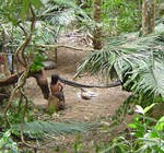 Acampamento típico usado como retiro de caça dos Guajás